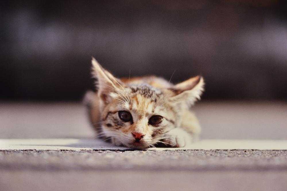 F3_Kitty_02.jpg