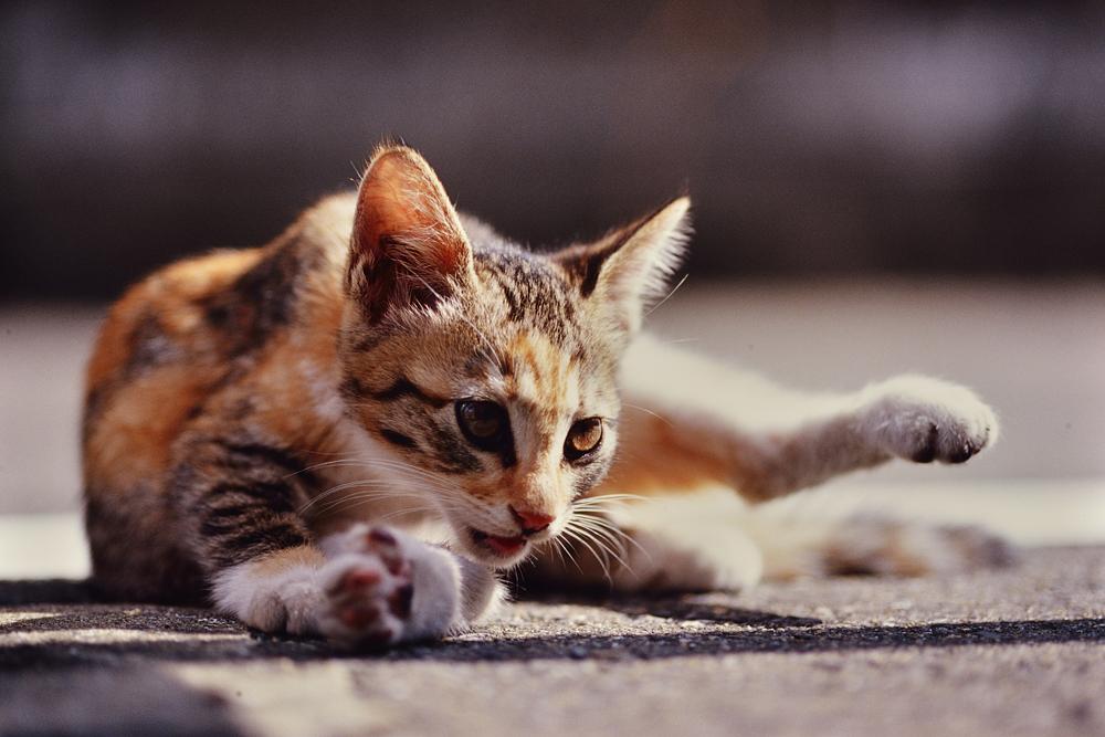 F3_Kitty_03.jpg
