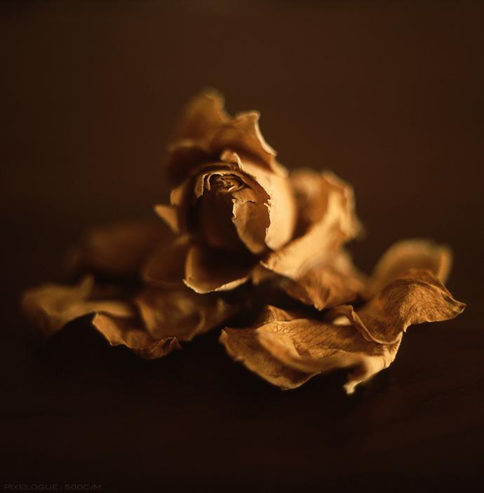 Hassel_Dry Flower_01.jpg