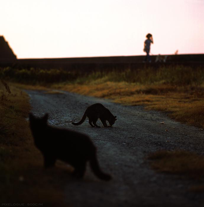Hasselblad_keya_cats_17.jpg