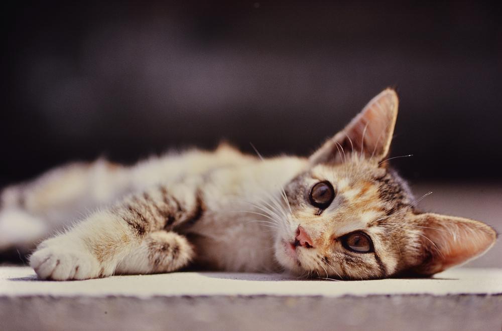 F3_Kitty_01.jpg
