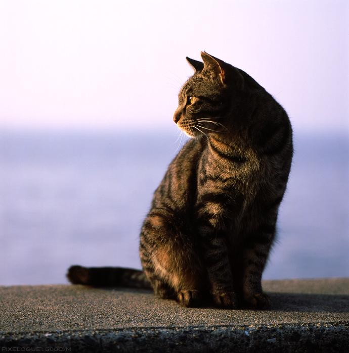 Hasselblad_fhama_cat_02.jpg