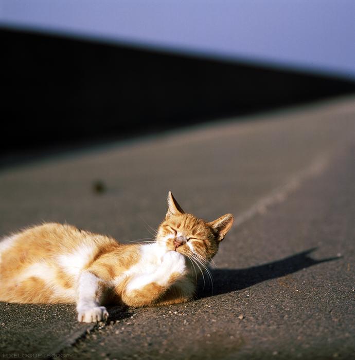 Hasselblad_fhama_cat_04.jpg