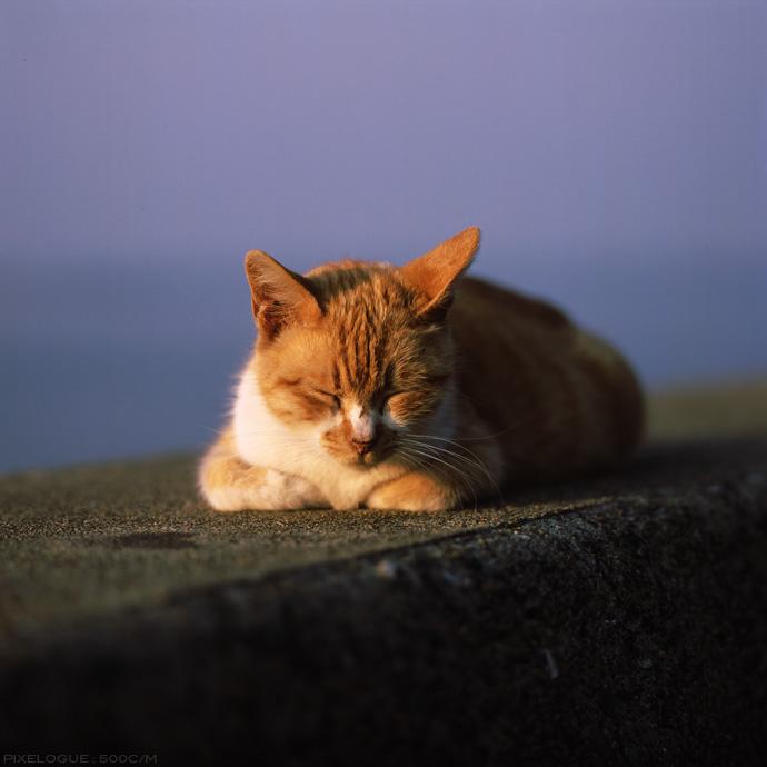 Hasselblad_fhama_cat_07.jpg