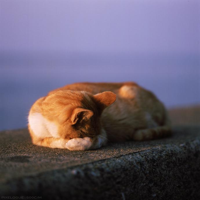 Hasselblad_fhama_cat_08.jpg