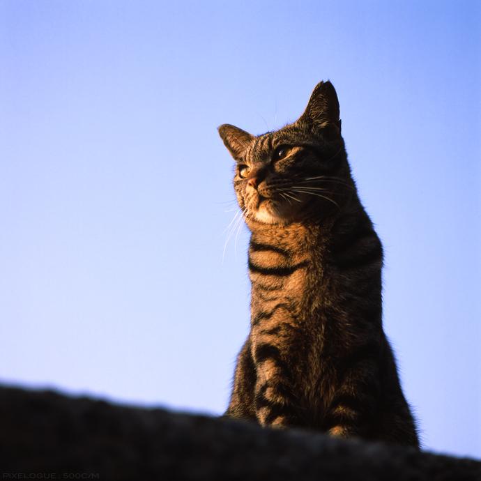 Hasselblad_fhama_cat_12.jpg
