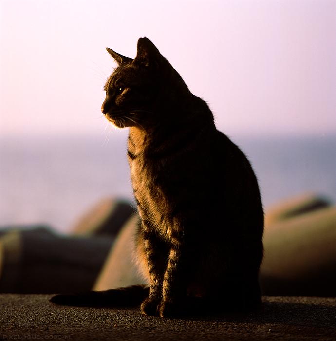 Hasselblad_fhama_cat_15.jpg